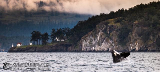 T49A1 orca breach