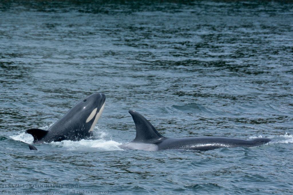 orcas T65A's